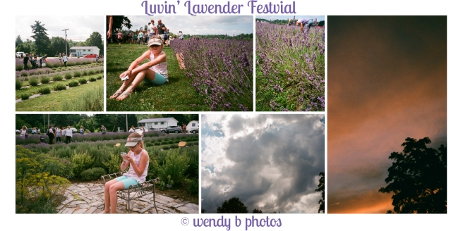 lavender-collage